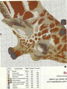 Жирафы1