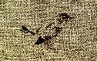 MTSA птичка